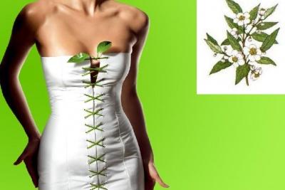 dieta del te verde