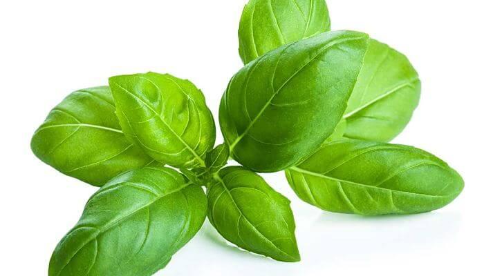 albahaca, planta medicinal
