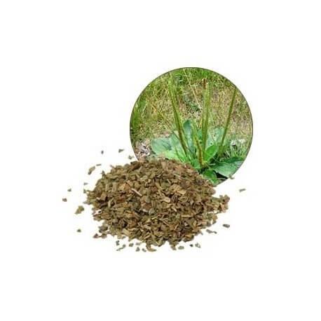 Descubre las propiedades medicinales del llantén