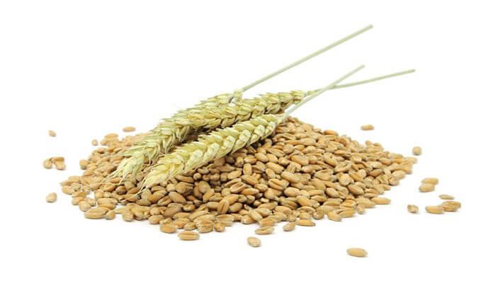 germen de trigo para las canas