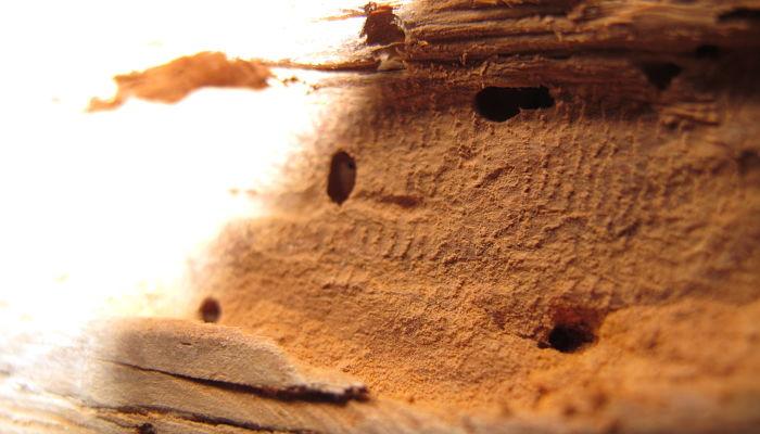 cómo eliminar los bichos de la madera