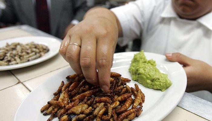 larvas un platillo exotico