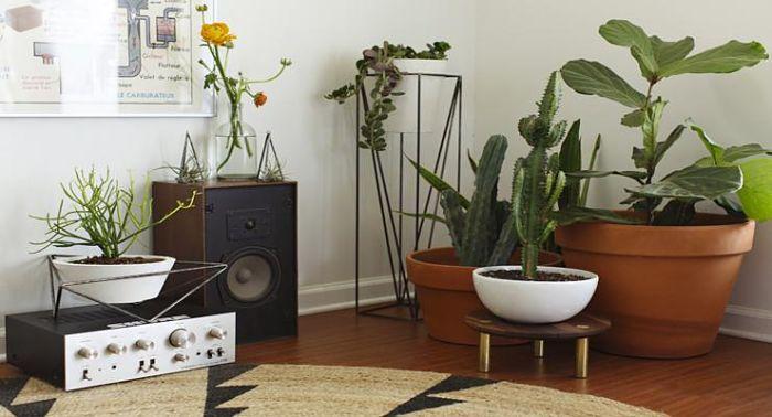 Hermosas plantas de interiores que purifican el aire de tu for Plantas de interior limpian aire