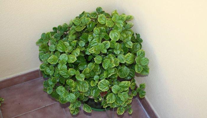 pasos para el buen cuidado de las plantas