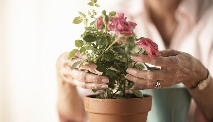 manualidades para el jardín