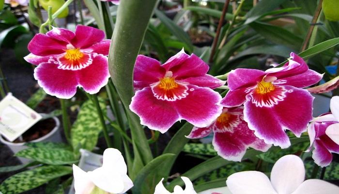 hermosas y exóticas flores