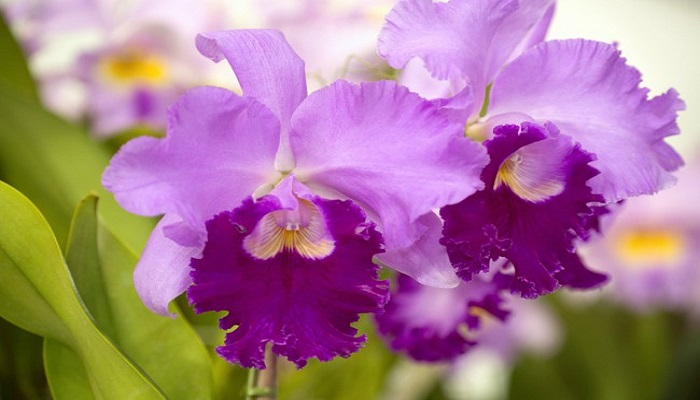 cómo trasplantar una orquídea
